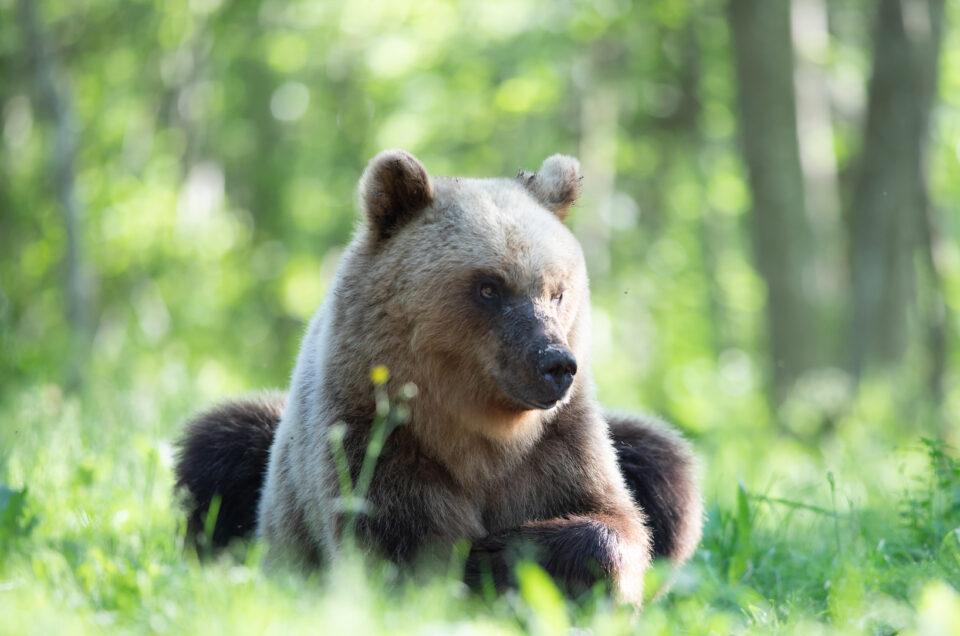Karuvaatlus Eestis